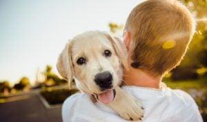 Animale de companie cand ai copii: pro sau contra?