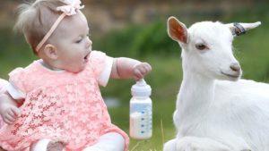 Read more about the article Laptele de capra sau vaca in lipsa celui matern